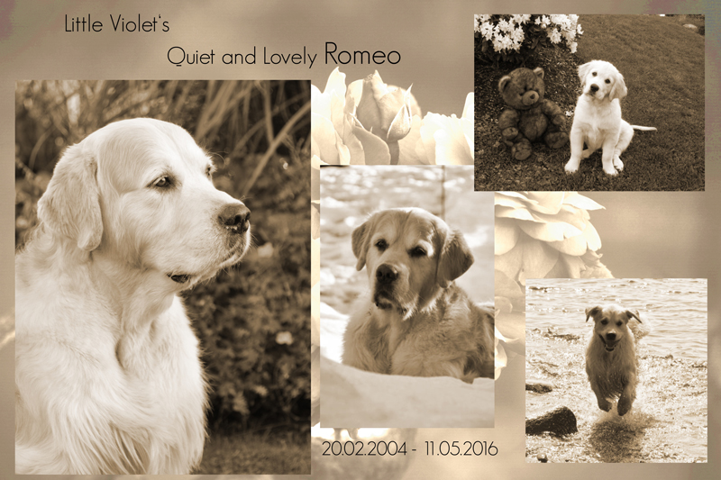 collage romeo